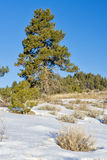 Snow covered mountain top with a pine tree Royalty Free Stock Photography