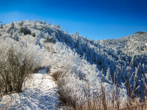 Snow Covered Mountain Trail. The Appalachian Trail near Charlie's Bunion covered in a December blanket of snow royalty free stock photography