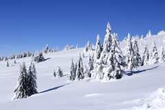 Snow covered mountain and trees royalty free stock image