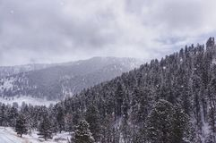 Snow covered mountains. In the Bighorn Mountains of Wyoming USA. It was snowing while photo was Royalty Free Stock Photos