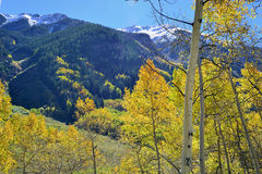 Snow covered mountains with colorful aspen during foliage season Royalty Free Stock Images