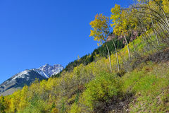 Snow covered mountains with colorful aspen during foliage season Stock Images