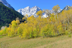 Snow covered mountains with colorful yellow, green and red aspen during foliage season Royalty Free Stock Images
