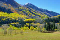 Snow covered mountains with colorful yellow, green and red aspen during foliage season Royalty Free Stock Photo