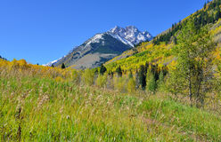 Snow covered mountains with colorful yellow, green and red aspen during foliage season Royalty Free Stock Photos