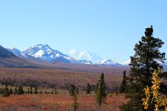 SNOW COVERED MOUNTAINS MT MCKINLEY DENALI ALASKA. Snow covered mountains clear blue sky and fall tundra in the foreground. Evergreen in foreground. Mountain in Stock Photo