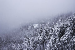 Snow covered mountainside forest disappearing in fog Stock Photography