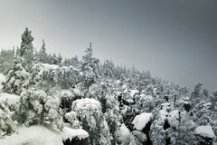 Snow covered mountainside forest disappearing in fog on the hori Royalty Free Stock Image