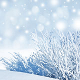 Snow covered nature Royalty Free Stock Photo