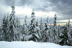 Snow-covered nette bomen Stock Fotografie
