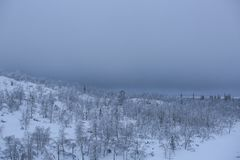 Snow covered northern forest Royalty Free Stock Photo