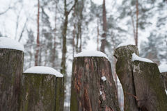 Snow-covered old rural wooden fence in winter time Royalty Free Stock Images