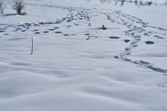 Snow-covered opheldering met sporen van verschillende schepselen Lago-Naki, de Belangrijkste Kaukasische Rand, Rusland stock afbeeldingen