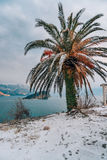 Snow-covered palm tree. Palm covered with snow. Winter on the co Royalty Free Stock Image
