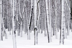 Snow covered park Stock Photography