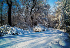 Snow covered park with afternoon sun. Snow covered trees branches and bushes with blue skies as background Royalty Free Stock Photo