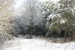 Snow covered park bench alone among trees Stock Photo
