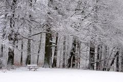 Snow covered park bench and wintry forest Stock Photos