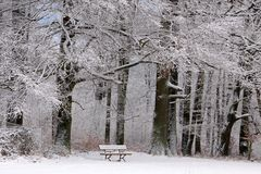 Snow covered park bench and wintry forest Stock Photo