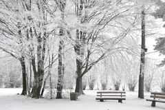 Snow covered park bench and wintry forest Stock Images