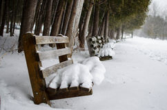 Snow covered park benches Stock Image