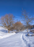 Snow covered park and blue sky. Royalty Free Stock Photo