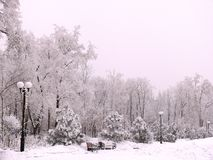Snow covered park In Donesk. stock photography