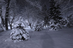 Snow covered park at night Stock Image