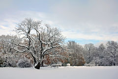 Snow-covered park in november day Stock Photos
