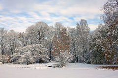 Snow-covered park in november day Royalty Free Stock Photo