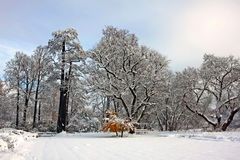 Snow-covered park in november day Royalty Free Stock Images