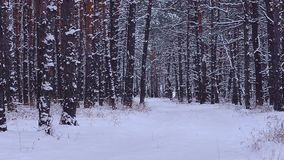 Snow-covered park, road in winter forest, covered snow trees stock footage