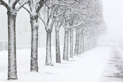 Snow-covered park in St. Petersburg. Russia. Royalty Free Stock Photography