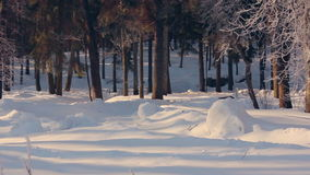 Snow covered park in winter. Winter park. Sunlight on snow in winter park. Snow covered park in winter. Nature background. Winter park. White snow in winter park stock footage
