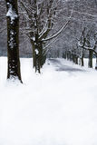 Snow covered path. A snow covered and tree lined path in winter royalty free stock image