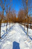 Snow Covered Path Royalty Free Stock Photos