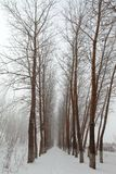 Snow Covered Path Royalty Free Stock Images