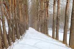 Snow Covered Path Royalty Free Stock Photo