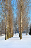 Snow covered path. Image of trees lining a snow covered path Stock Photo