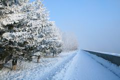 Snow-covered path Royalty Free Stock Images