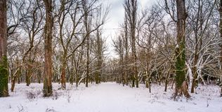 Snow covered path among the leafless trees. Lovely nature scenery in winter park Stock Image