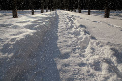 Snow covered path at night Stock Photo