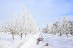 A snow-covered path in the park Stock Photography