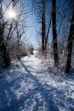 Snow covered path through trees. Stock Photography