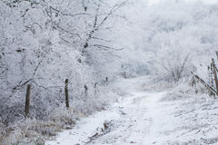 Snow covered path in winter forest Royalty Free Stock Photography