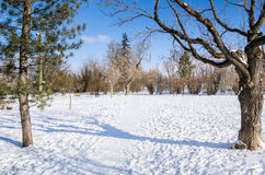 Snow Covered Path through the Woods and Blue Sky Royalty Free Stock Photography