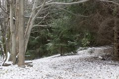 Snow covered pathway in forest royalty free stock photography
