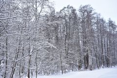 Snow-covered peaceful nature gives a sense of peace, tranquility and tranquility. Snow gently adorns the trees, wearing a white coat. In the winter forest time stock photography