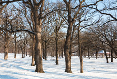 Snow covered picnic area at park Royalty Free Stock Photo