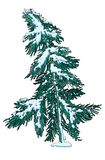 Snow-covered pijnboomboom, enig voorwerp Stock Afbeeldingen